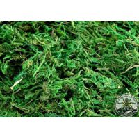 Natural dry moss dark green 30g